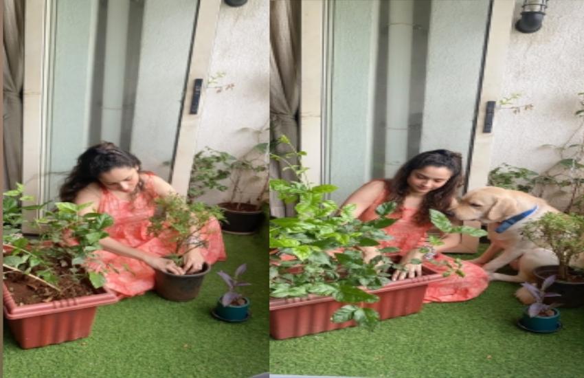 बहन श्वेता ने बताया-सुशांत के नाम पर 1 लाख से ज्यादा पौधे लगाए गए, अंकिता ने भी शेयर की तस्वीर