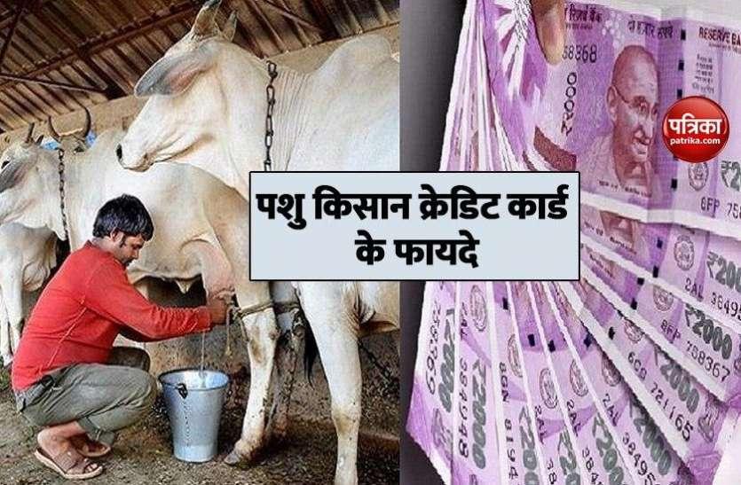 Pashu Kisan Credit Card : पशु खरीद पर बिना गारंटी के मिलेगा 1.60 लाख रुपए तक का लोन, 57 हजार लोगों के आवेदन हुए स्वीकार