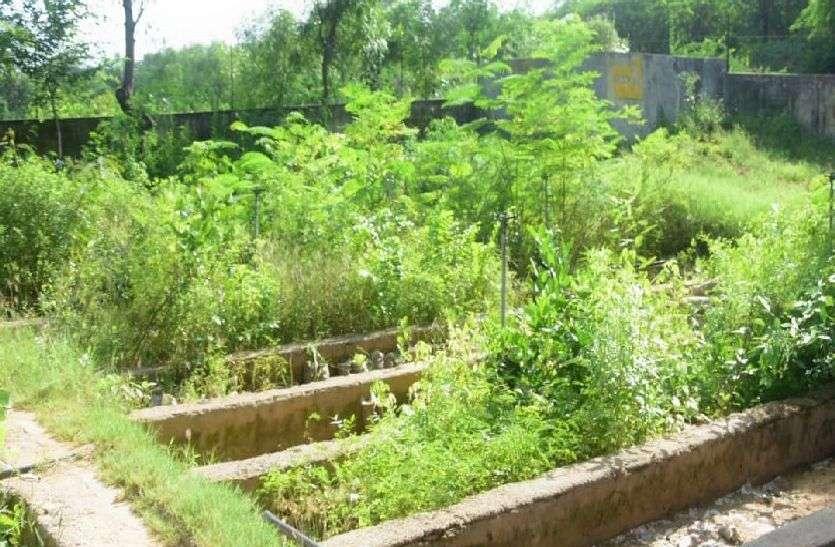 हरियाली के लिए हो रही है पौधों की बिक्री
