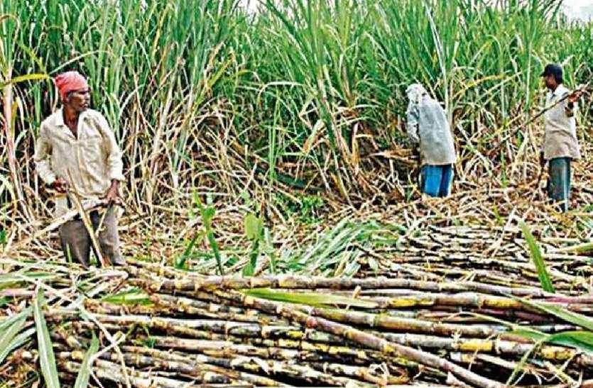 चीनी मिलों पर किसानों के 13,000 करोड़ रुपये बकाया, सरकार ने संसद में दी जानकारी