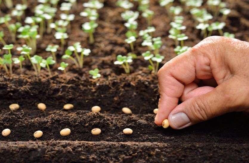 अब किसान ऑनलाइन मंगवा सकेंगे बीज