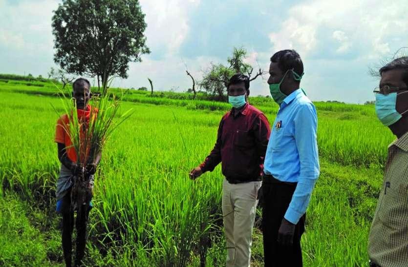 कृषि वैज्ञानिक बोले- वर्तमान मौसम कीटों व रोगों के लिए है अनुकूल, किसानों को सावधान रहने की जरूरत