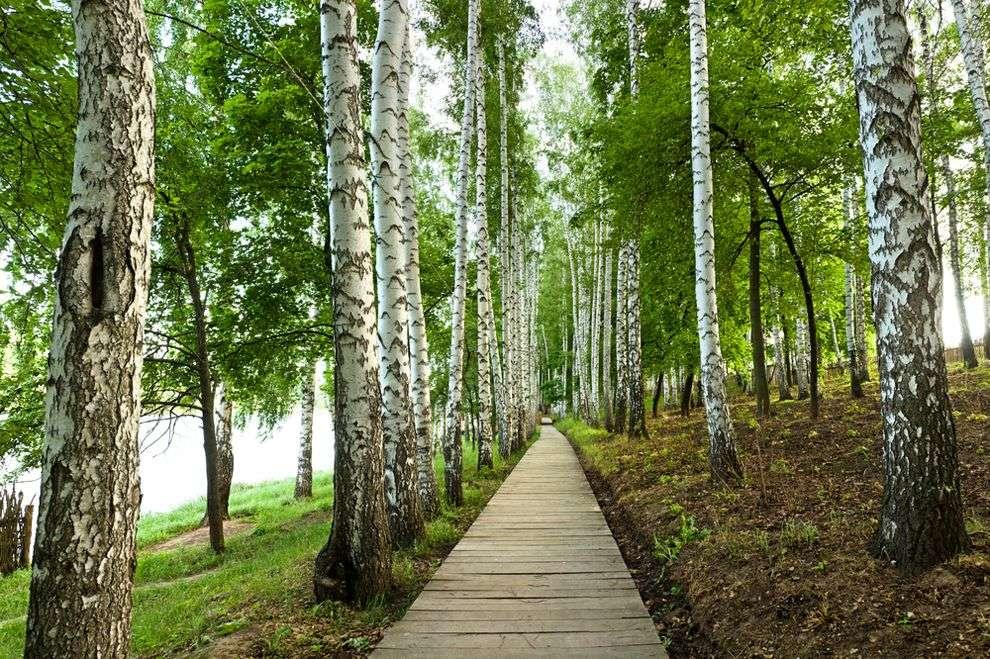 पत्थरों से कागज बनाकर लाखों पेड़ बचा रहे ये दो युवा, सालाना 25 हज़ार किलो कार्बन भी कम कर रहे