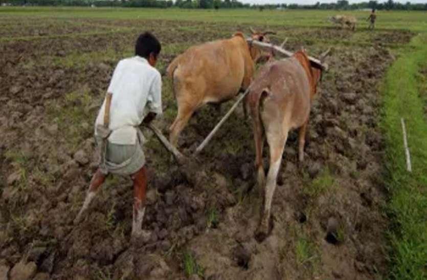 बागवानी और मसाला की खेती से किसानों की आय दूना करेगी सरकार