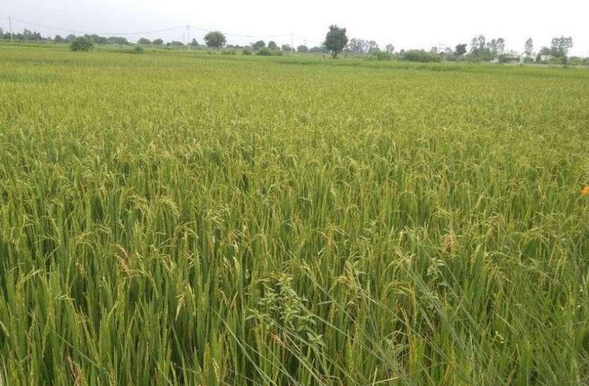 कृषि क्षेत्र में निजीकरण की दस्तक देते प्रतिध्वनित होते हैं किसान बिल