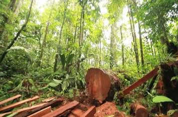 लॉकडाउन के दौरान दुनिया में 6500 वर्ग किलोमीटर वन काट डाले
