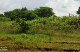 पंचायत की भूमि पर चौतरफा अतिक्रमण, तालाब पेटे में भी लोगों ने किया कब्जा