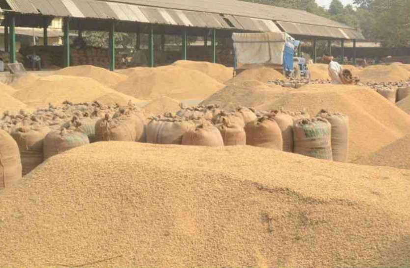 धान के मुद्दे पर सियासत जारी: कांग्रेस ने की सरकार को धान बेचने वाले 575 भाजपा नेताओं की सूची जारी
