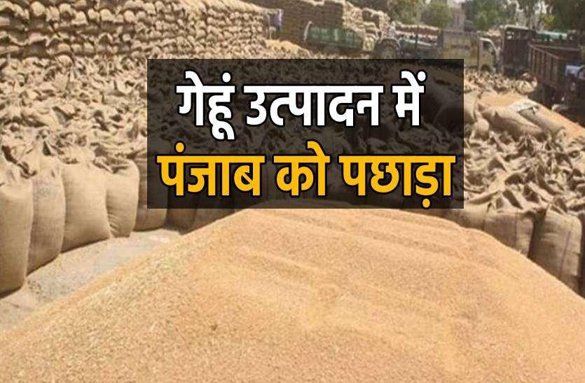 गेहूं उत्पादन और किस्मों में इस जिले ने पंजाब को पछाड़ा