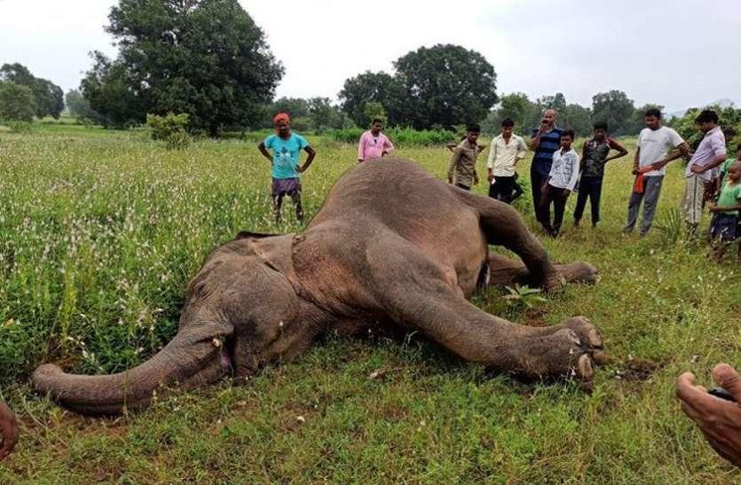 गर्भवती मादा हाथी के मृत्यु मामले में 10 से ज्यादा ग्रामीण गिरफ्तार