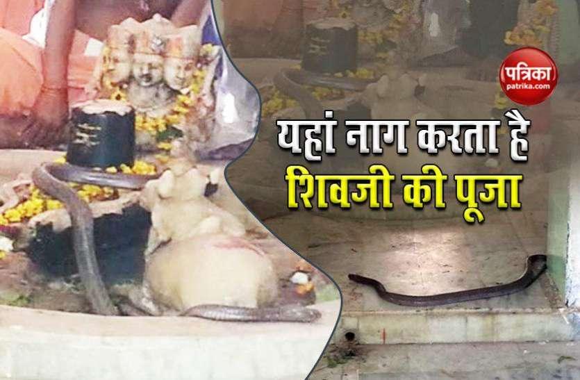 अनोखा शिव मंदिर, जहां नाग रोजाना करता है पूजा, बहुत दूर-दूर से आते है श्रद्धालु