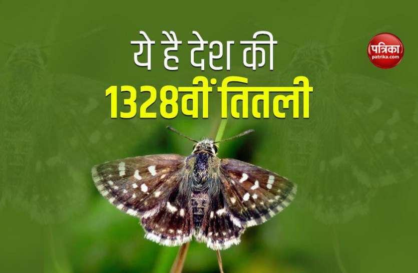 ये है देश की 1328वीं तितली, 2.5 सेमी चौड़ी भरती है तेज उड़ान