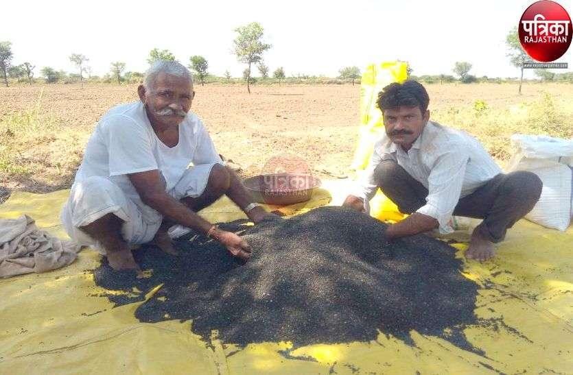 तापमान ने किसानों की बढ़ाई धडकऩें, नहीं हो रही सरसों की बुवाई