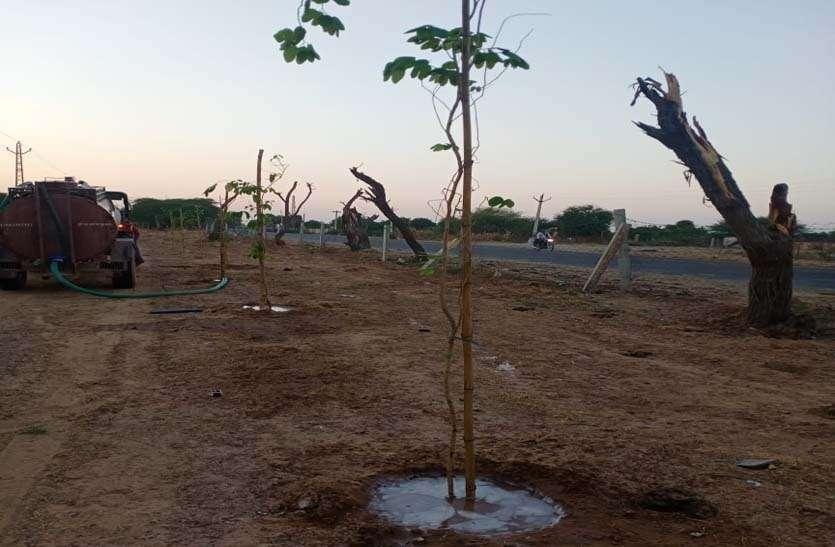 मुरझाए पौधों को मिला जीवनदान, टैंकर से पानी पिलाया