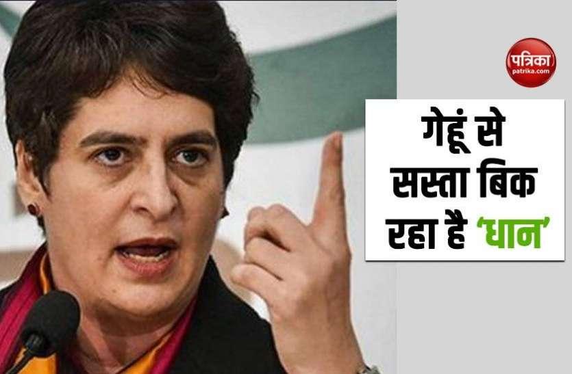 धान की खरीद न होने से यूपी के किसान परेशान, Priyanka Gandhi ने योगी सरकार को दी इस बात की चेतावनी