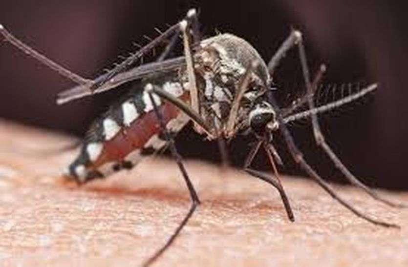 कोरोना से उभरे ही थे कि डेंगू ने लिया चपेट में