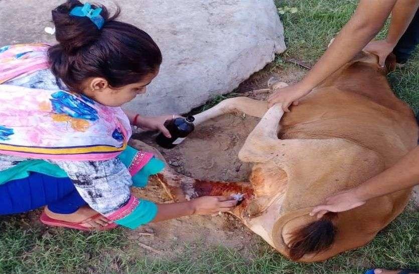 यह है जानवरों की दोस्त दीदी, नाम है प्रिया महरिया