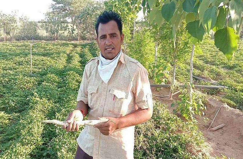 जैविक खेती से नवाचार कर सफेद शकरकंद उगाने में पाई सफलता