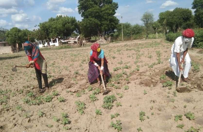 17 जिलों की 59 ग्राम पंचायतों के किसानों के लिए गुड न्यूज