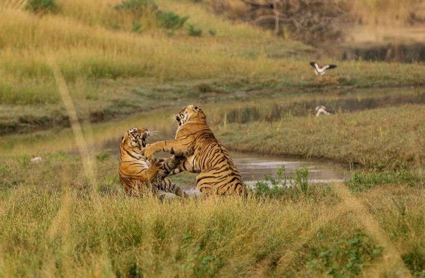 tigress_2.jpg