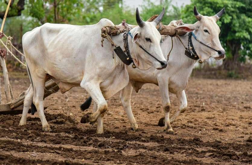 यूपी के किसानों के चेहरे शीघ्र मुस्कुराएंगे, गांव-गांव में सरकार बना रही है 5000 गोदाम