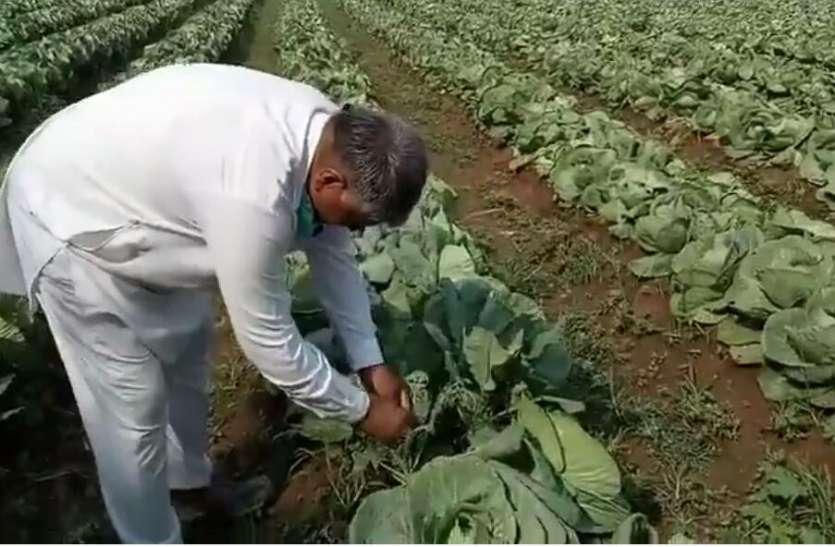 सब्जियों की पैदावार कर ग्रामीणों को दे रहे हैं रोजगार