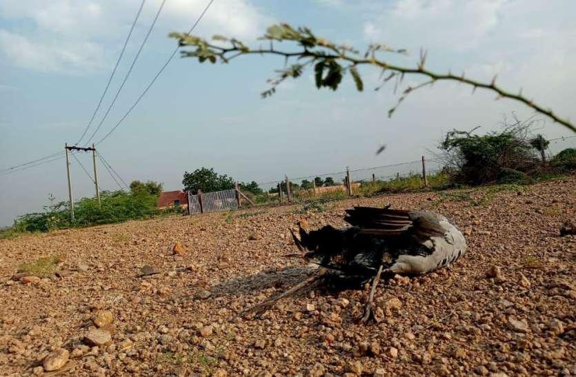 करंट की चपेट में आने से दो प्रवासी पक्षियों की टूटी सांसें