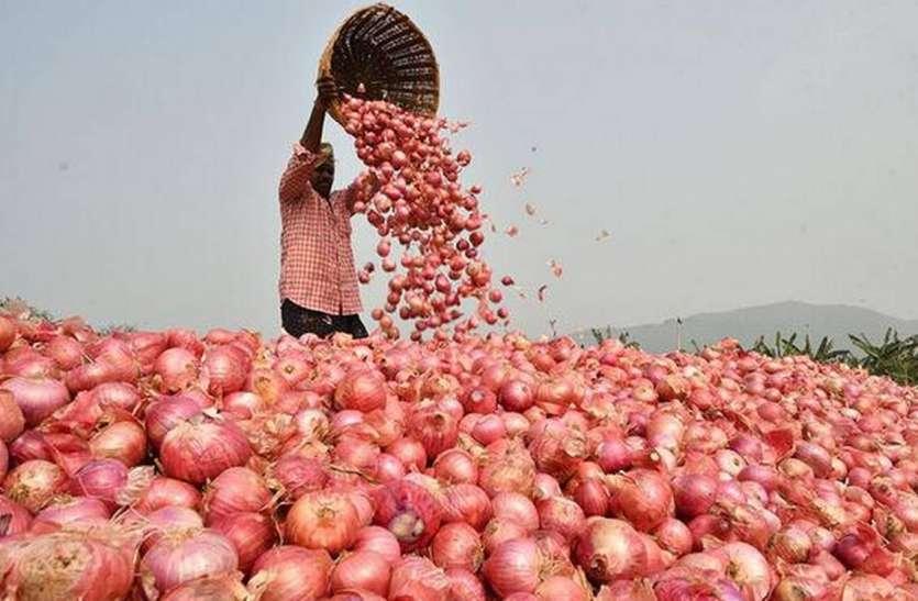 राजस्थान के लाल प्याज पर देश की निगाह, कई राज्यों से खरीददार आए, दाम बढ़ने से किसानों को होगा फायदा