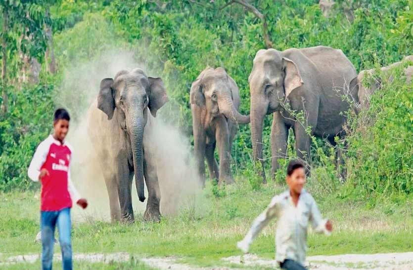 बस्तर बॉर्डर में शरारती युवकों ने हाथियों पर बरसाए पत्थर, भड़के 22 गजराज के दल ने बालोद DFO को दौड़ाया