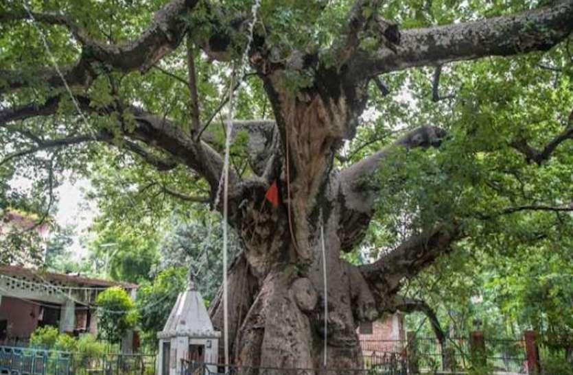अब पर्यटकों को यूपी बुलाएंगे सौ साल के उम्र के पेड़, जैव विविधता बोर्ड ढूंढ़ेगा हेरिटेज ट्री