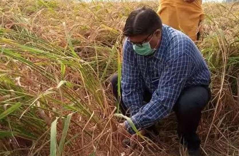 खेत में धान काटते डीएम को देखकर चौंक किसान, खुशी के मारे तालियां बजकर झूमने लगे गांववाले