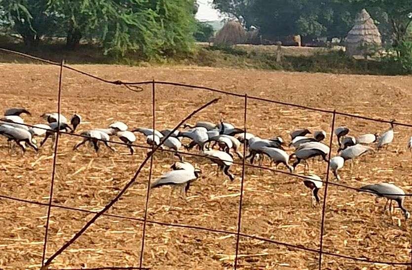 बीसलपुर बांध के जलभराव में प्रवासी पक्षियों ने दी दस्तक