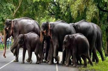 बालोद: हाथियों के दल पर ग्रामीणों ने फिर बरसाए पत्थर, रास्ता रोके जाने से खफा दो DFO आपस में भिड़े, CCF से शिकायत