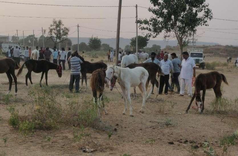 कोरोना की भेंट चढ़ा श्री खलकाणी माता का  गर्दभ मेला, कम आए गधे-घोड़े