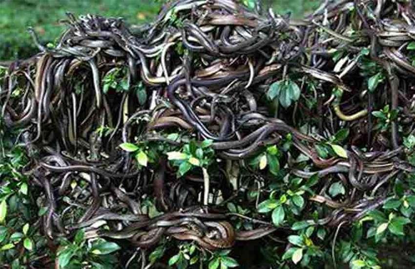 snake_3.jpg