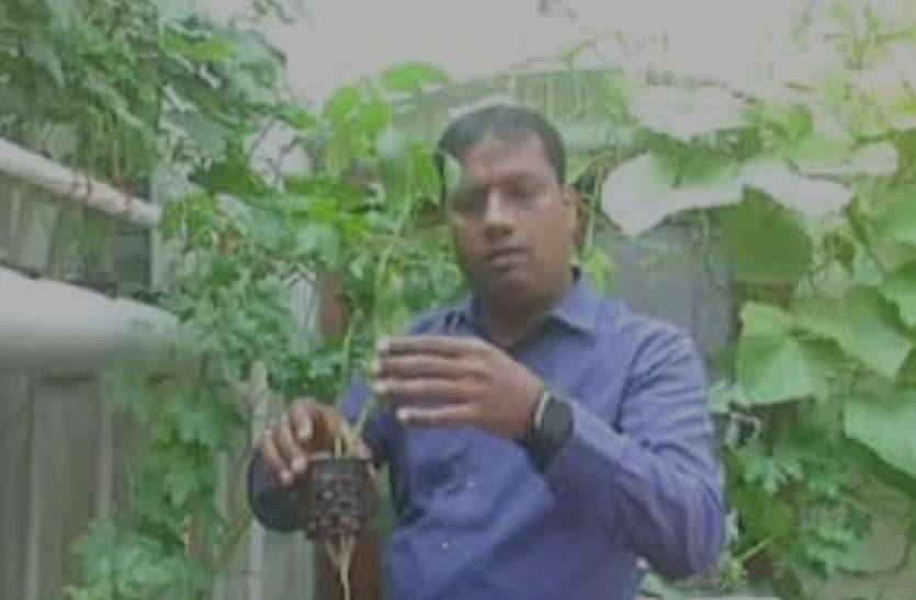 आगरा में इंजीनियर ने बिना मिट्टी के पानी में उगा दी सब्जियां, चारों ओर हो रही वाहवाही