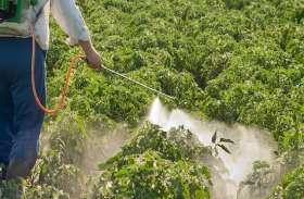 किसानों के लिए अच्छी खबर, ब्रम्हास्त्र-नीलास्त्र से फसल को मिली प्राकृतिक सुरक्षा, मिला कम दाम में ज्यादा असरदार कीटनाशक