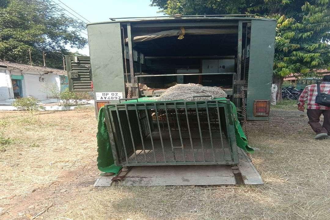 तेंदुआ पकड़ने के लिए रखा गया पिंजरा