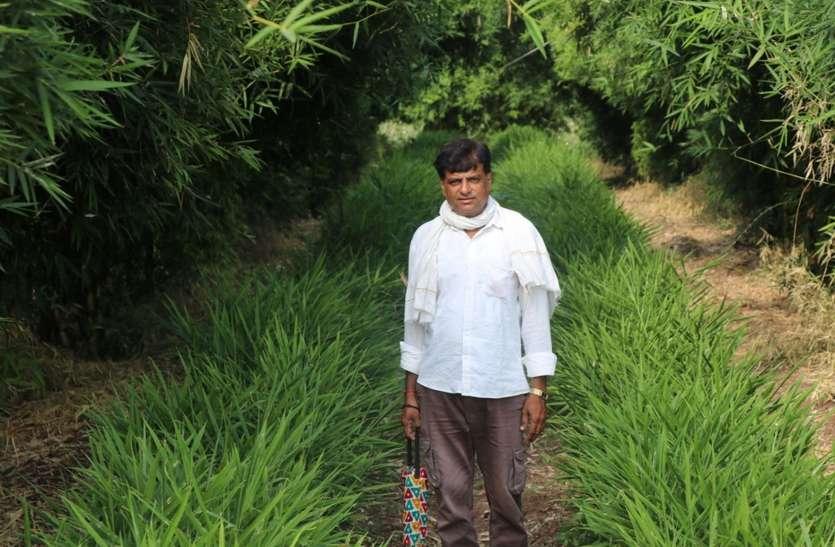 साथी किसानों ने प्रयोग पर उड़ाई हंसी, अब मुनाफा देख दांतों तले दबा रहे हैं उंगली
