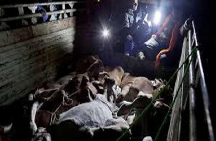 खुलासा: रात के अंधेरे में होता है पशुओं का अवैध कटान, सुबह दिन निकलने से पहले ही भेज देते हैं 'सीमा पार'