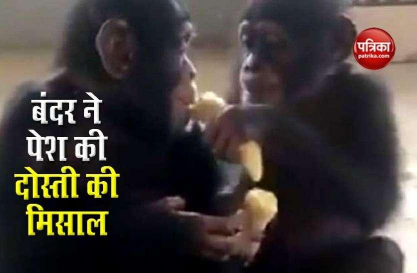 बंदर ने पेश की दोस्ती की मिसाल ,सिखाई मानवता और भाईचारे की बात, वीडियो देख आप हैरान हो जाएंगे