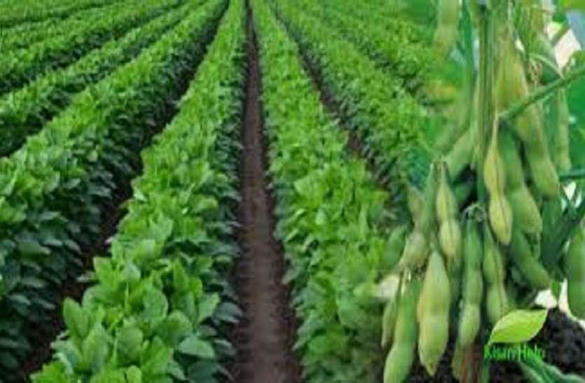 एमएसपी पर उपज बेचने के लिए 40 हजार किसानों ने करवाया रजिस्ट्रेशन