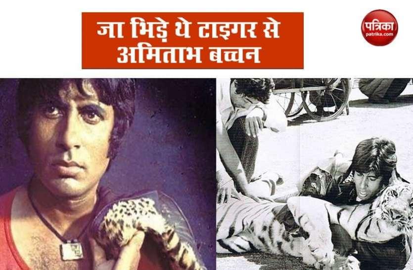 टाइगर संग फाइट सीन की खबर सुन उड़ गए थे Amitabh Bachchan के होश, कहा- 'कभी नहीं भूल सकता वो पल'