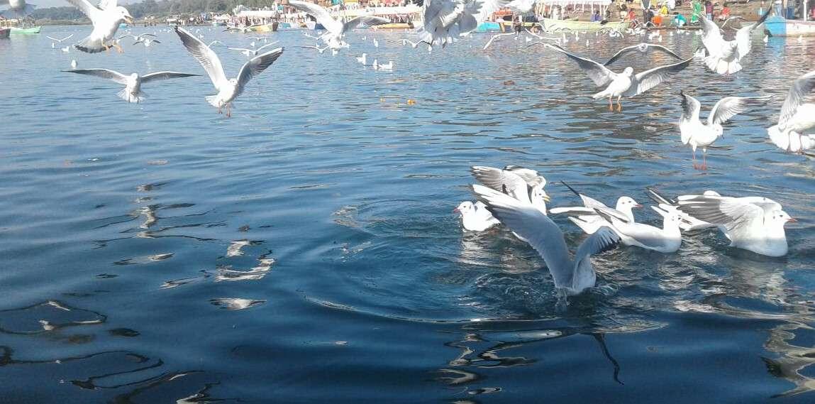 birds_03.jpg