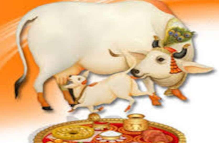 Gau Vats Dwadashi 2020 गाय की पूजा का दिन, जानें भविष्य पुराण में क्या बताया गया इसका महत्व