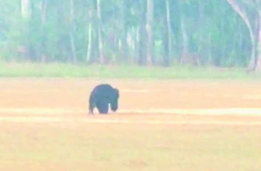 यहां भालू व ग्रामीणों के बीच बन गया है अनोखा रिश्ता, साथ रह रहे पर नहीं पहुंचा रहे एक-दूसरे को नुकसान