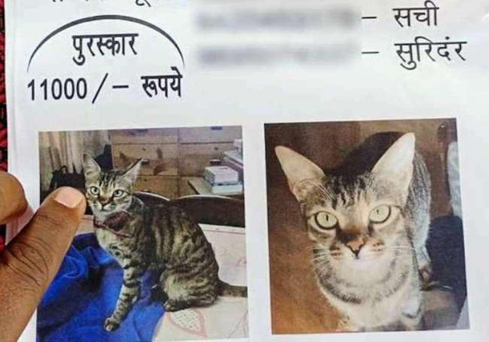गोरखपुर रेलवे स्टेशन से गायब हुई पूर्व चुनाव आयोग की बिल्ली, पूरे शहर में लगाए पोस्टर, ढूंढने वाले को 11 हजार इनाम