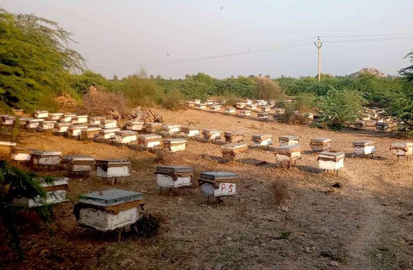शहद के लिए खेतों में जुटे मधुमक्खी पालन से जुडे व्यवसायी
