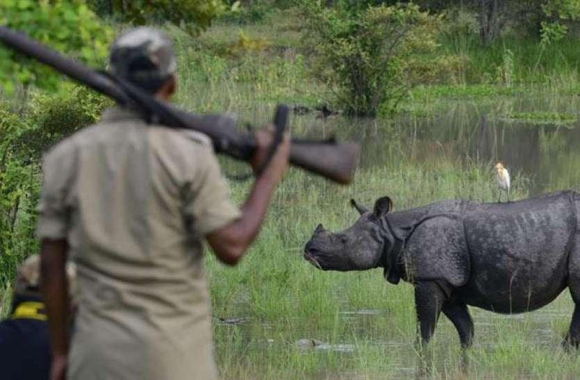 RTI से बड़ा खुलासा: नहीं रुक रहा भारतीय गैंडों का शिकार, 2 वर्षों में मार दिए गए इतने Rhinoceros