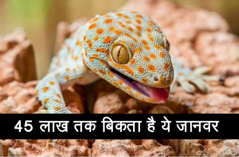 इस शख्स ने एक लुप्त होती प्रजाति को बचाने के लिए ठुकरा दिए 20 लाख